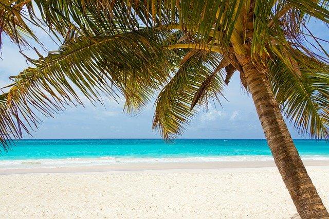 palma na pobřeží